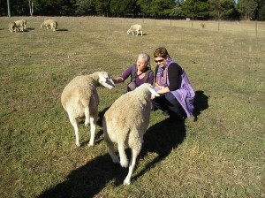 Sheep with Tracey and Jyoti