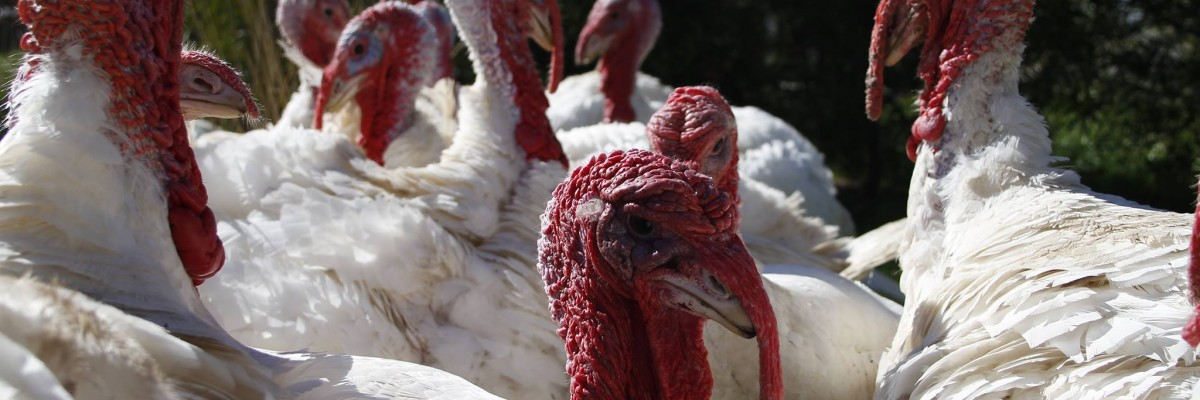 Latest Poultry Place Newsletter – January 2019