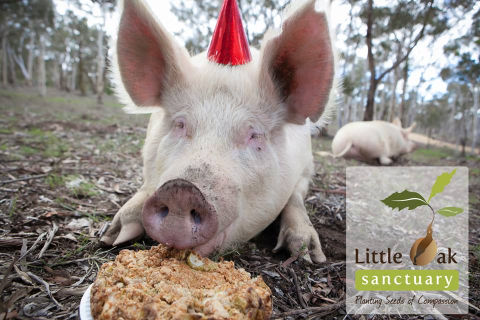 Gifts of Kindness from Little Oak Sanctuary