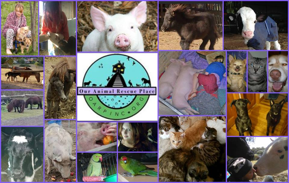 Donate much needed funds to 'Our Animal Rescue Place' (OARP) run by Vegans near Melbourne