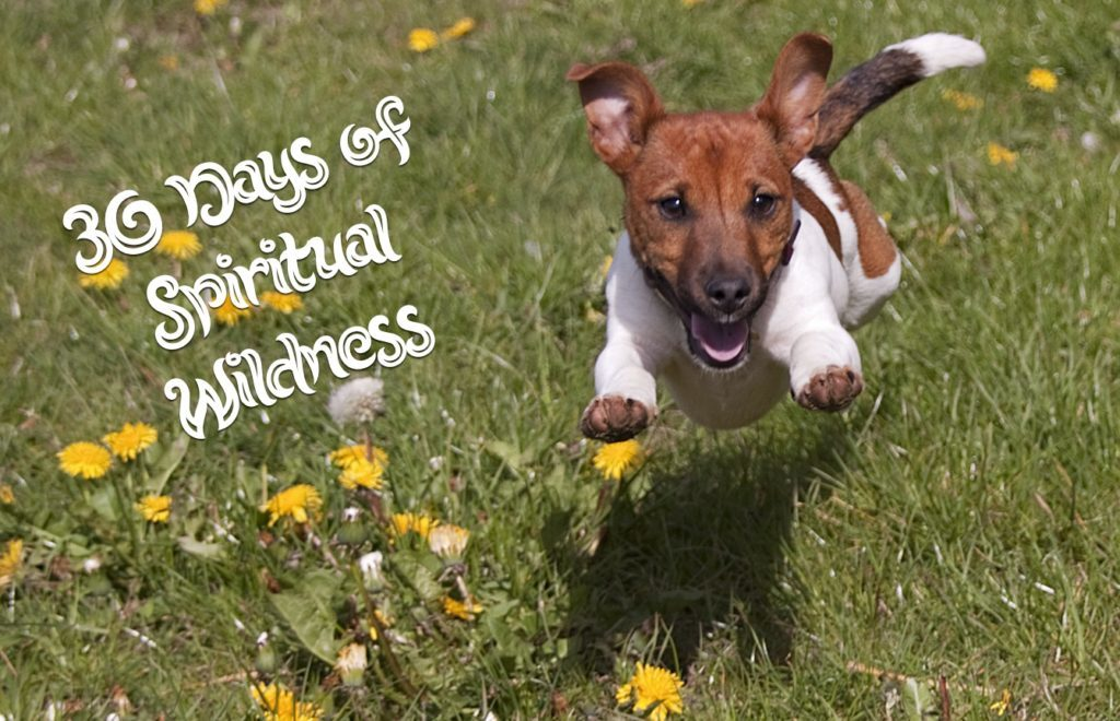 30 Days of Spiritual Wildness (All proceeds to A Place of Peace Sanctuary)