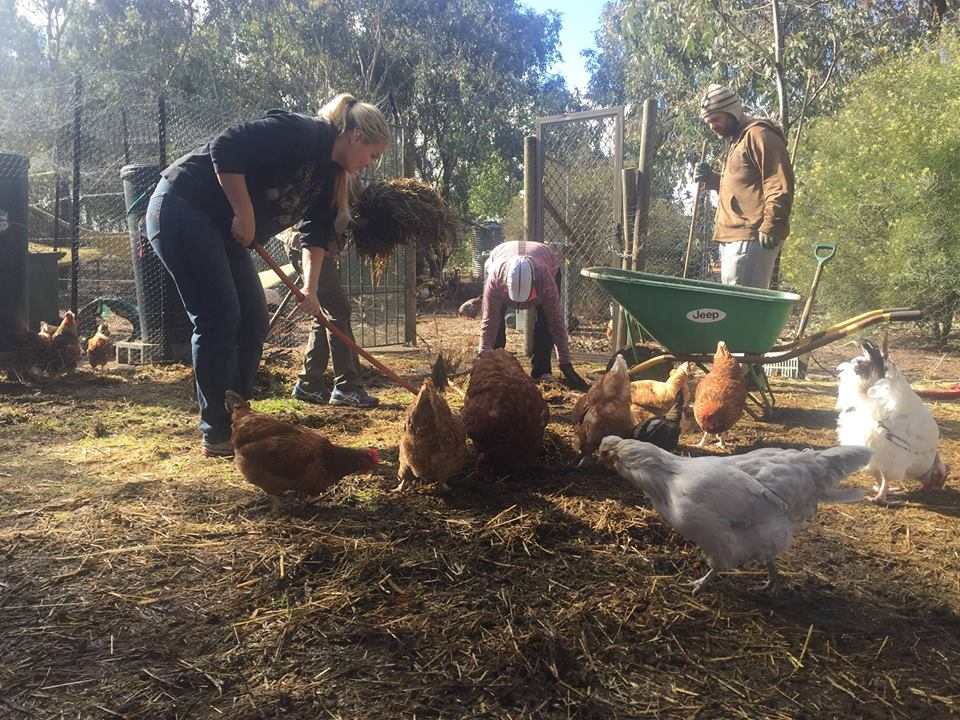 Vegan ACT's Poultry Place Sanctuary Late Winter Working Bee – Sunday, 28 August 2016