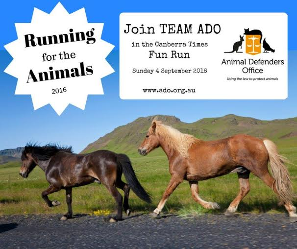 Walk/run with Animal Defenders Office in the Canberra Times Fun Run – 4 September 2016