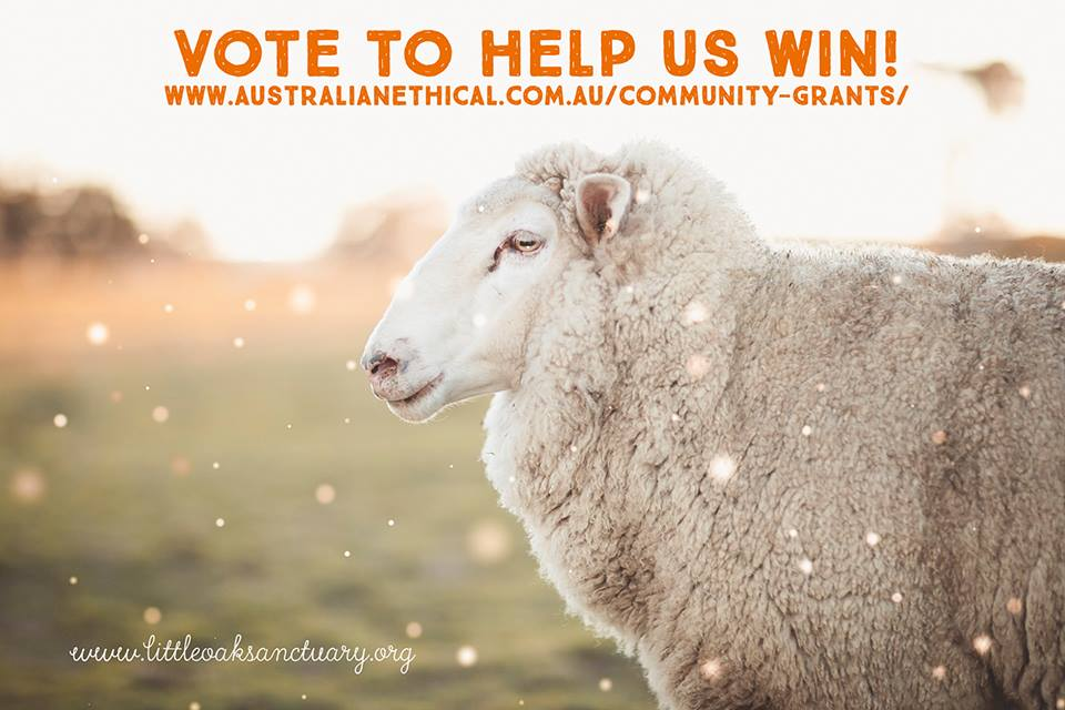 Vote for Grant for Little Oak Sanctuary