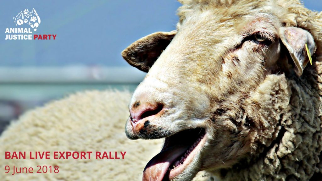 Rally to Ban Live Export – Saturday, 9 June 2018