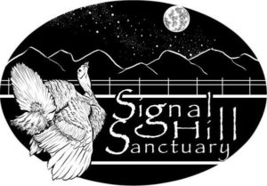 Donate to help sheep at Signal Hill Sanctuary