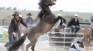 Bungendore Rodeo 1