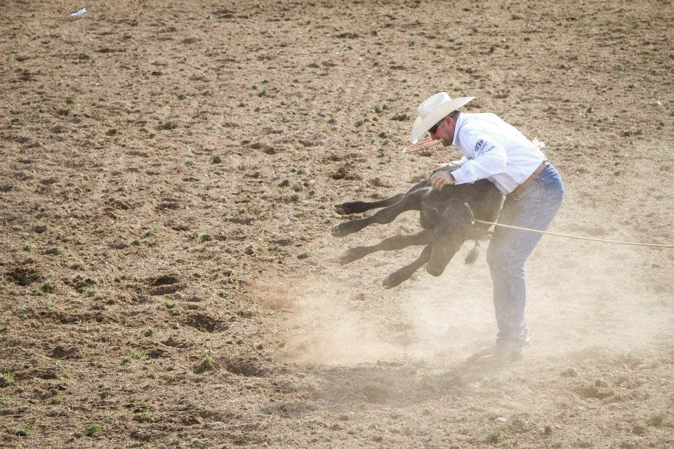 Take action against Rodeos – Written by Little Oak Sanctuary