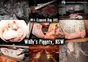 Share the truth about Australian piggeries with consumers