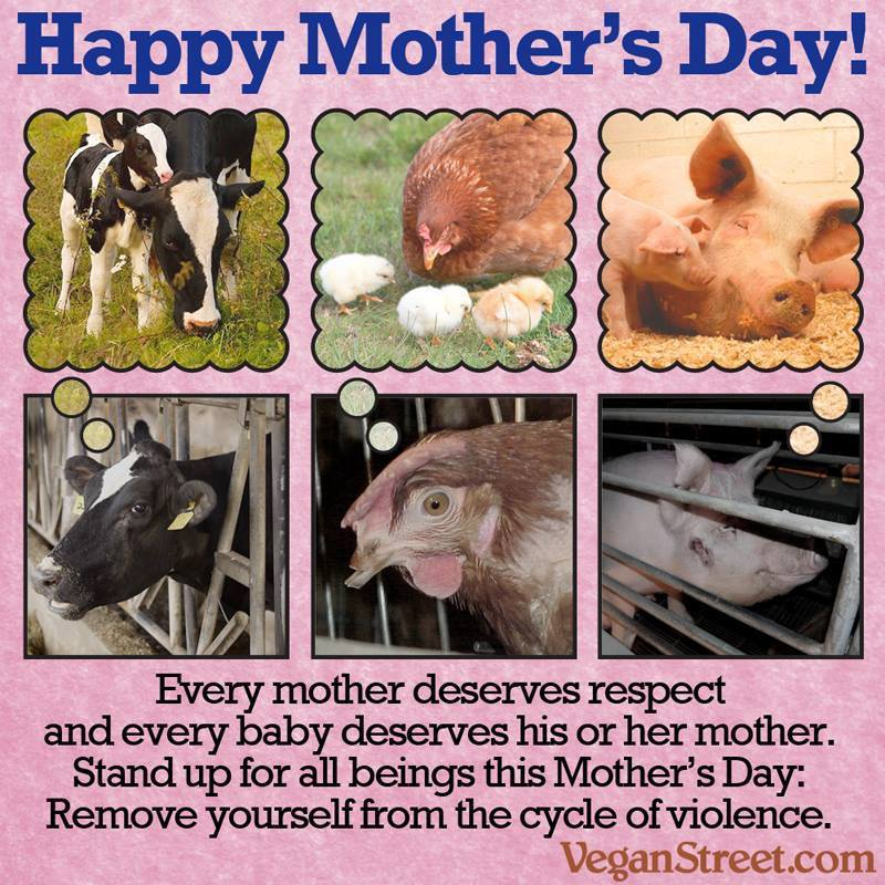 All Mother's Day – A meme, letter and video to get people thinking