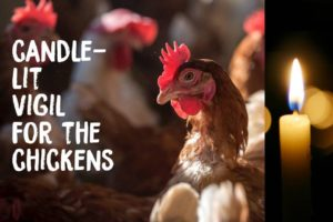 Videos from Candle-Lit Vigil For the Chickens – 4 November 2017