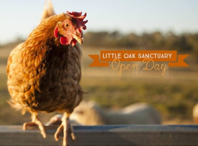 Little Oak Sanctuary Session – Saturday, 25 May 2019